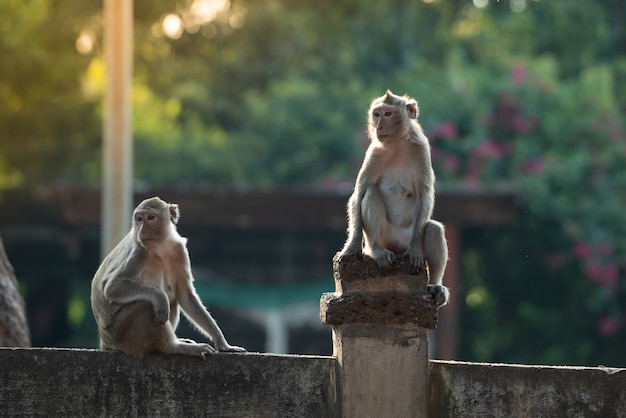Two monkeys were determined to look in the same direction Premium Photo