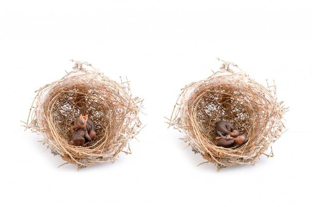 2 из птенцов в коричневом гнезде сухой травы. Premium Фотографии