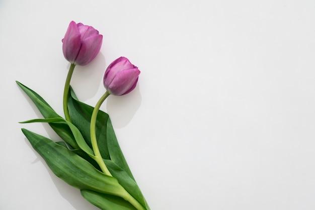 2つの紫色のチューリップ Premium写真