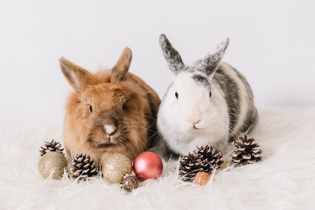 Two rabbits with christmas decoration Free Photo