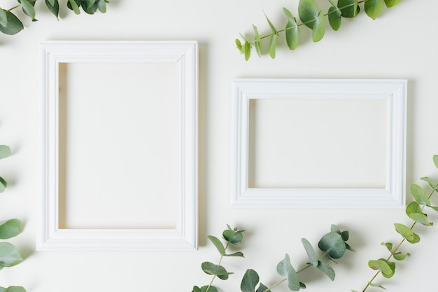Two white border frames with green leaves on white background Premium Photo