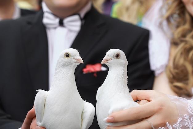Two white doves Premium Photo