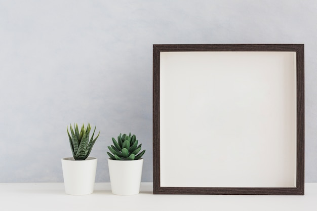 Two white potted cactus plant with blank white photo frame on desk against wall Free Photo