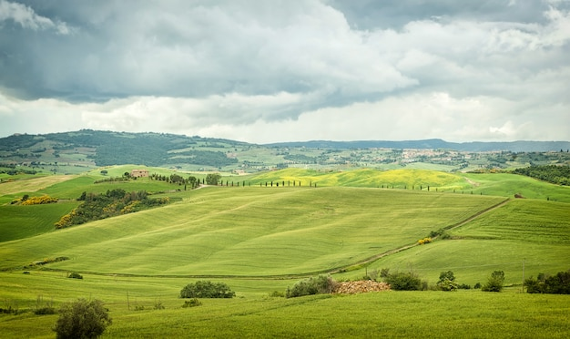 Typical landscape of the tuscan hills in italy Premium Photo