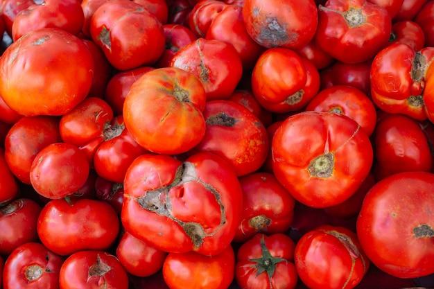 Uいトマト Premium写真
