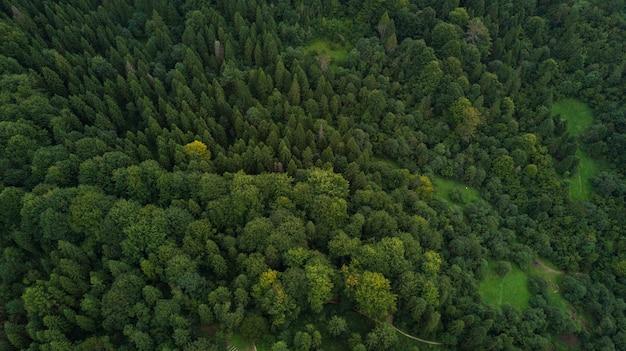 Foresta di montagna carpatica ucraina dall'alto vista aerea Foto Gratuite