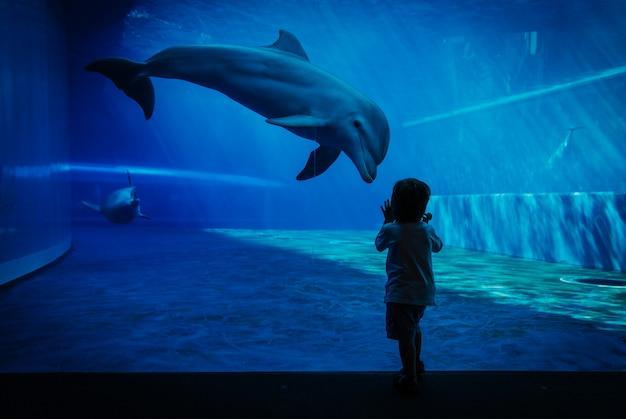 イルカと小さな子供の間のユニークなコミュニケーションの瞬間 Premium写真