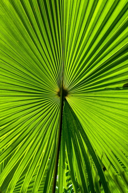 Free Photo Unique Leaves Of A Beautiful Plant