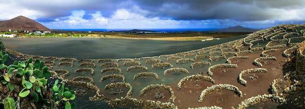 ランサローテ島の黒い砂浜にあるユニークなブドウ園 Premium写真