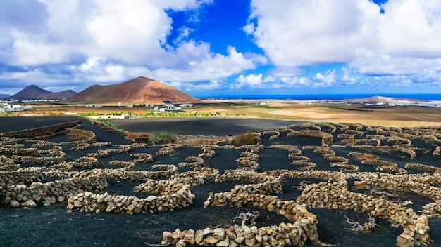 黒い砂浜にあるユニークなブドウ園。カナリア諸島、ランサローテ島 Premium写真