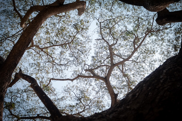 Upper view under big tree in day time Premium Photo
