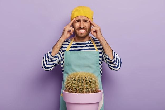 動揺した男は、こめかみに指を置き、歯を食いしばり、鉢植えのサボテンの近くに立ち、エプロンを着て、観葉植物の世話をし、黄色い帽子をかぶって、紫色の背景の上でポーズをとります。人と家事 無料写真