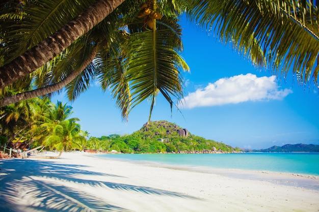 休暇夏の休日の背景-白い砂とヤシの木と日当たりの良い熱帯のカリブ海の楽園ビーチ Premium写真