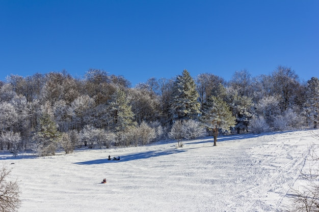Vacationers tourists with children ride on an inflatable sled on a snowy slope on a winter day Premium Photo