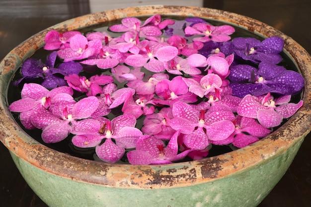 Vanda orchids flower in water Premium Photo