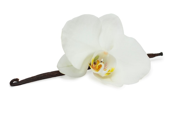 Vanilla beans and with white orchid Premium Photo