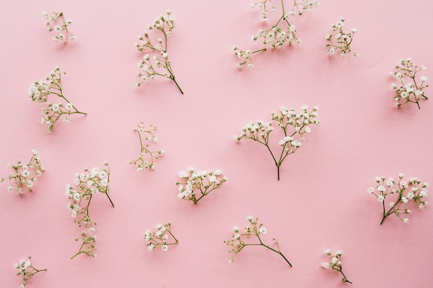 Variation of little baby's breath flowers on a light pink background Free Photo