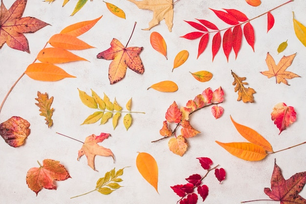 Variety of autumn leaves top view Free Photo