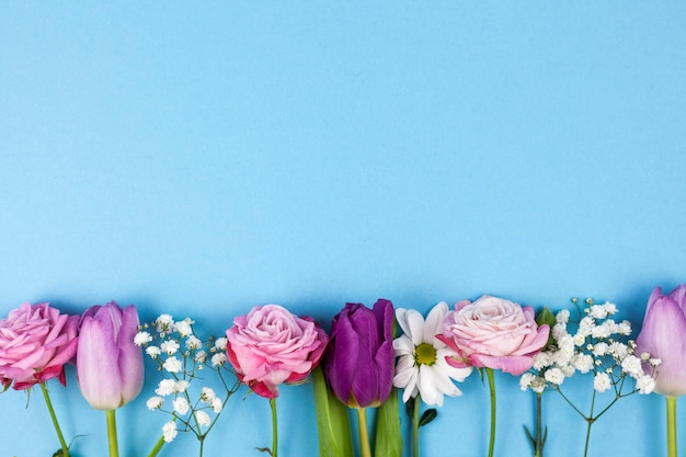 Variety of beautiful flowers arranged on bottom of blue background Free Photo