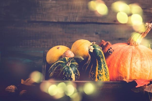 Variety decorative pumpkins. autumn, thanksgiving or halloween concept Premium Photo