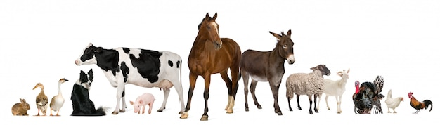 Variety of farm animals in front of white background Premium Photo