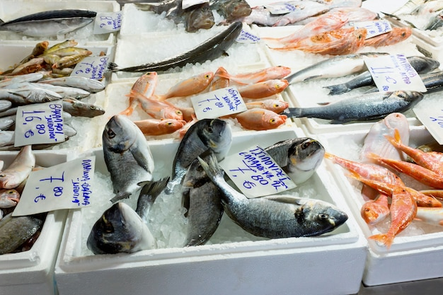Variety of sea fishes on the counter in a greek fish shop Premium Photo