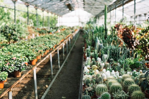 Various cactus and flower plants in greenhouse Free Photo