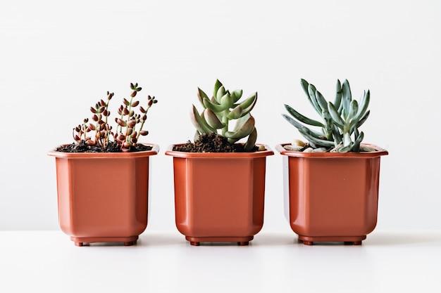 Various cactus and succulent plants in pots Premium Photo