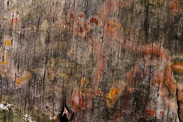 Различные цвета дерева с копией пространства Бесплатные Фотографии