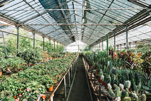 Various plants growing in greenhouse Free Photo