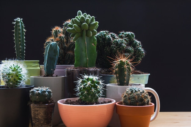 Various type of mini green succulent house plants pots against black background Free Photo
