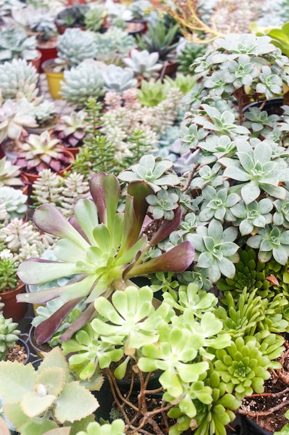 Freepik & Various types of succulent in flower pots in the greenhouse ...