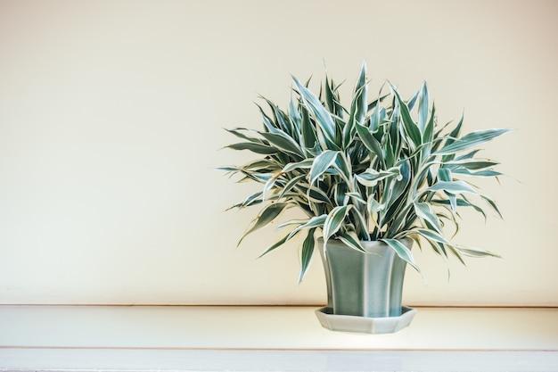 Vase plant decoration interior Free Photo