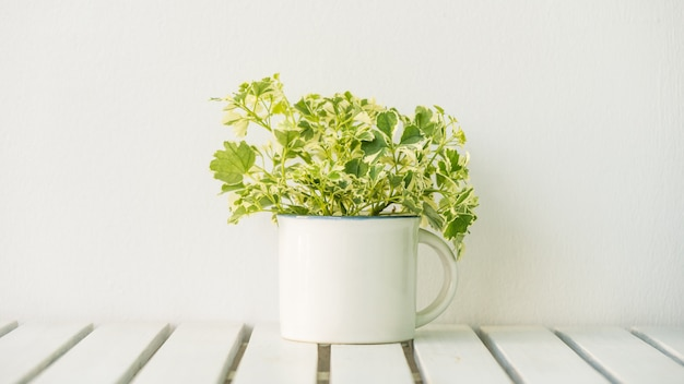 Vase plant Free Photo