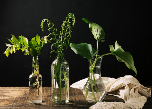 Vases with green plants Free Photo