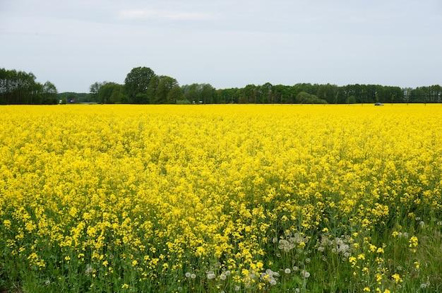 Vasto campo pieno di fiori di campo giallo Foto Gratuite