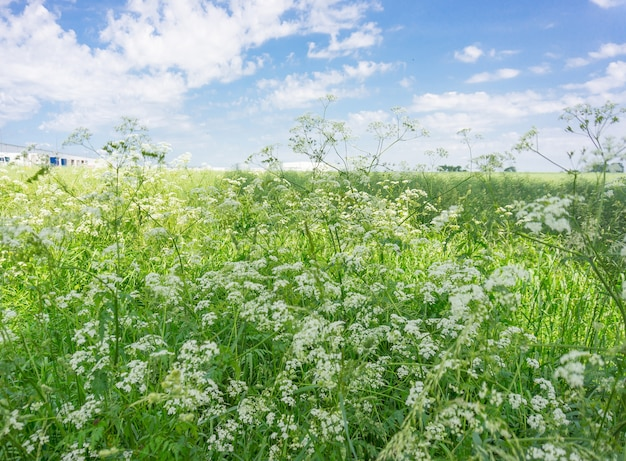 Vast green field with wildflowers during daytime Free Photo