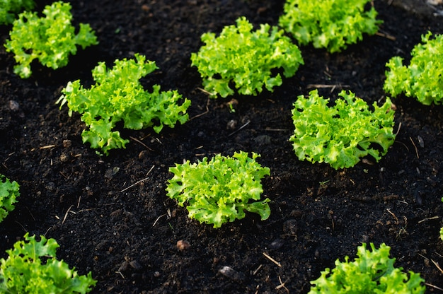 Vegetable garden from farmers Premium Photo