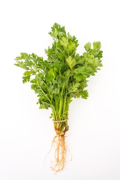 Растительное зеленый пучок петрушки фон Бесплатные Фотографии