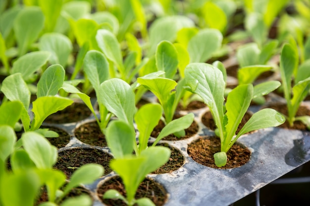 Vegetable seedlings are planted in pots, organic. Premium Photo