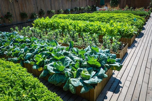vegetable garden inspiration