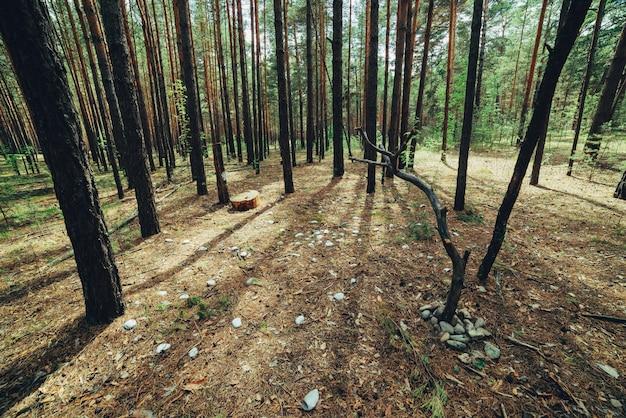 Venue of mysterious rite in dark woods. Premium Photo