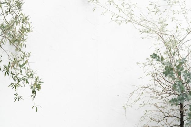 ベランダの植物と白い壁、テキストやグラフィックのためのスペース Premium写真