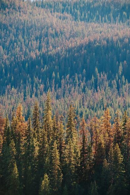 昼間の松林の垂直空中ショット 無料写真