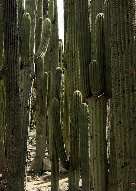 Vertical closeup of beautiful column cacti Free Photo