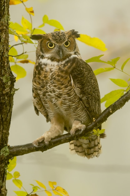 Vertical closeup of a great horned owl standing on a tree branch under the sunlight Free Photo