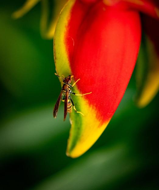 Вертикальный крупный план polistes dorsalis на цветочном листе под солнечным светом Бесплатные Фотографии