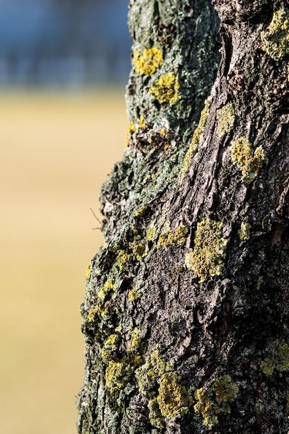 ぼやけた背景で日光の下で苔で覆われた木の樹皮の垂直クローズアップ 無料写真