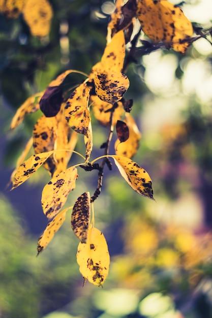 Colpo verticale del primo piano di belle foglie dorate con i punti neri su loro in una foresta Foto Gratuite