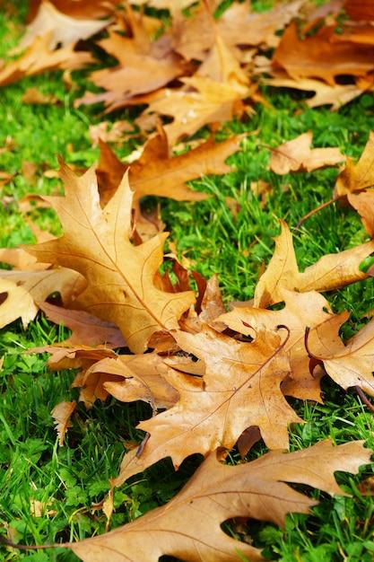 Colpo verticale del primo piano delle foglie secche cadute di autunno sull'erba verde Foto Gratuite